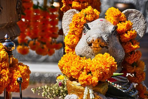 Rat Shrine - Chiang Mai, Thailand