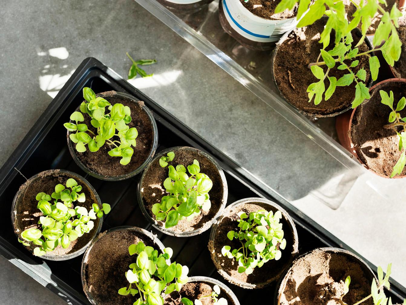 Give un Take Garden Club