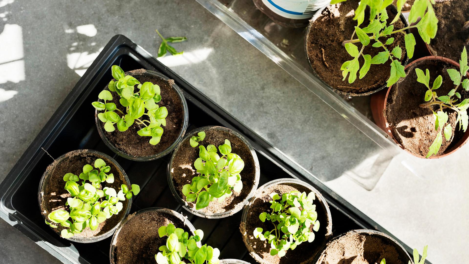 Assess Plants