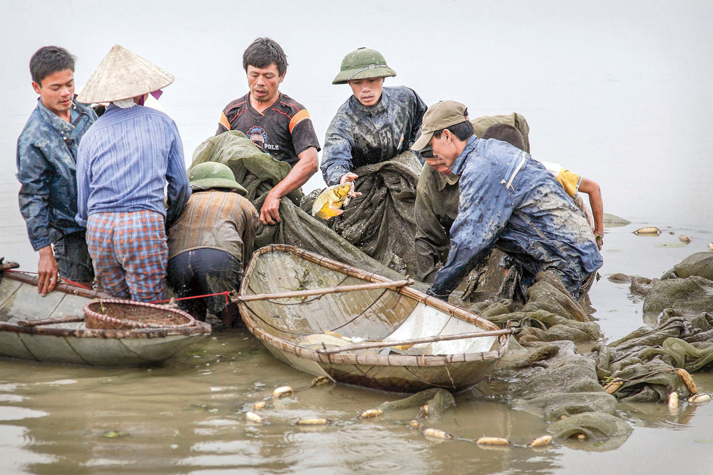 Catfish Harvest