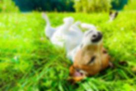 Dog Siesta At Park.jpg