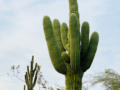 Traveling Thrifter - Phoenix, AZ