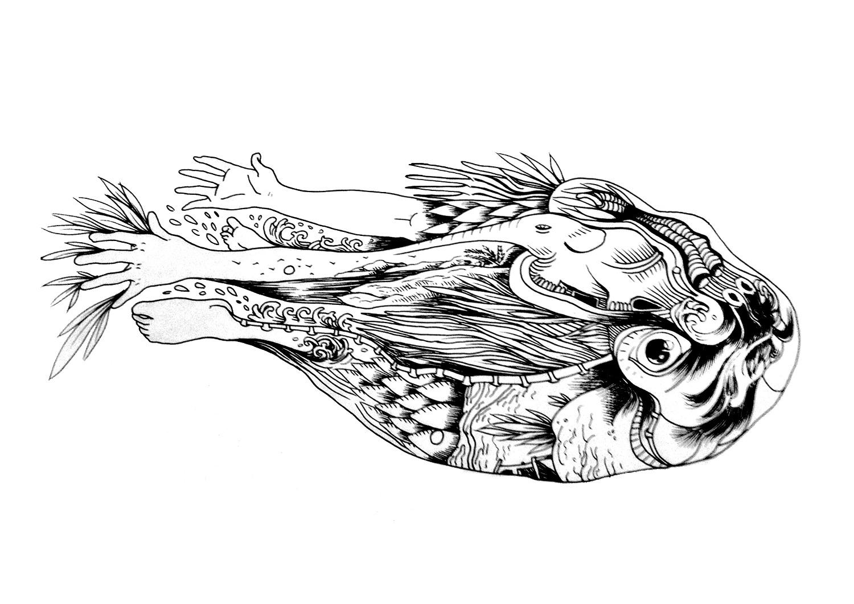 pesce uomo elefante