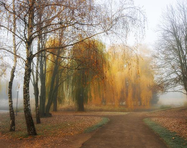 Weeping Willow Series.jpeg