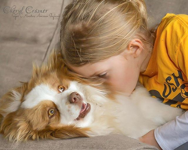 Our niece and our miniature American shepherd, Sammie sharing some love