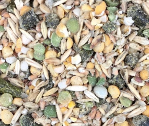 Goat Feed (grains) - Organic, Soy-free