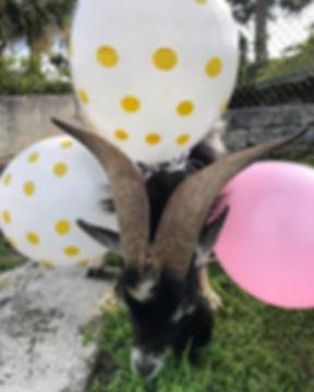 Birthday Parties! 🐣 🎉 🎈.jpg