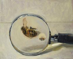 honeybee_magnifiying_glass