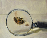 Honeybee and Magnifiying Glass