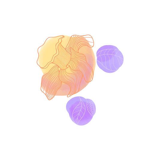 daffodil (framed)