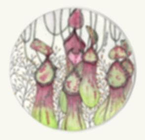 Pitcher Plants.jpg