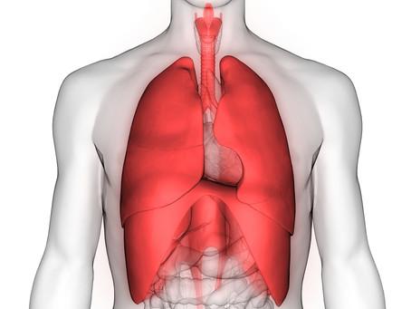 Die Lunge – unsere Verbindung zur Aussenwelt