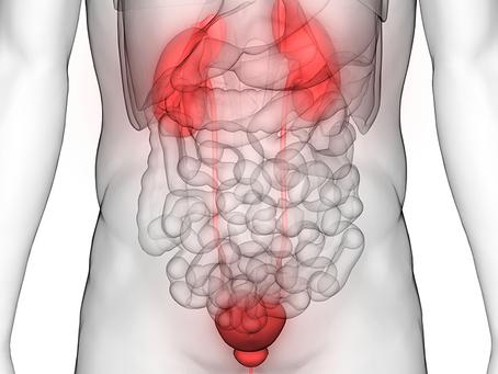 Die Nieren – Hüterinnen der Lebenskraft