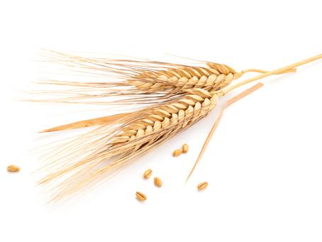 Weizen, Gluten & Co.: Tipps für einen klaren Kopf