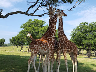 Fossil Rim Wildlife Park - Texas