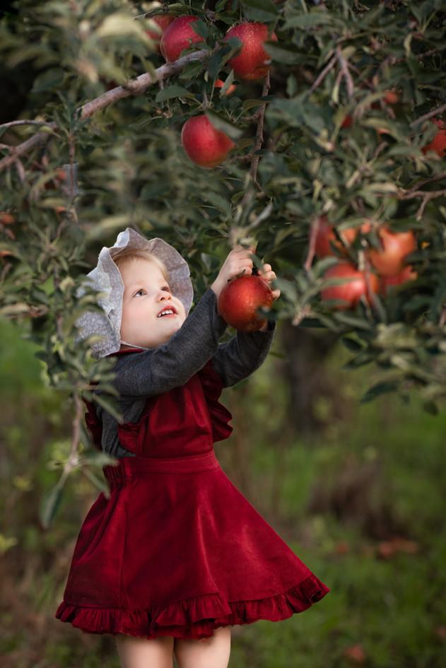 Apple Orchard Toddler Photoshoot