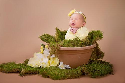 Newborn Session Deposit