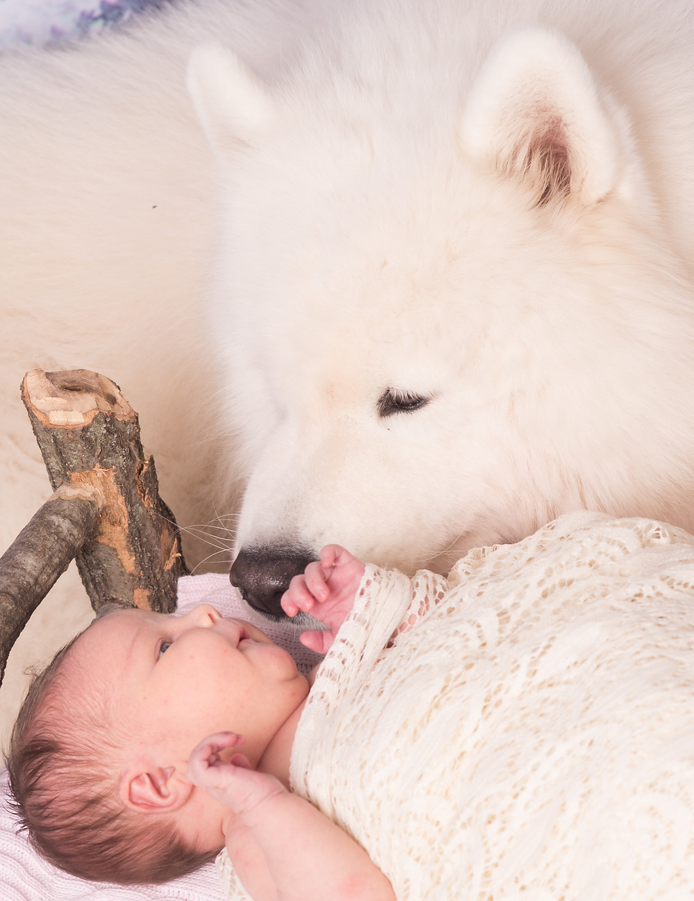 Dog and Baby Smile at Each other at Overland park newborn photo studio