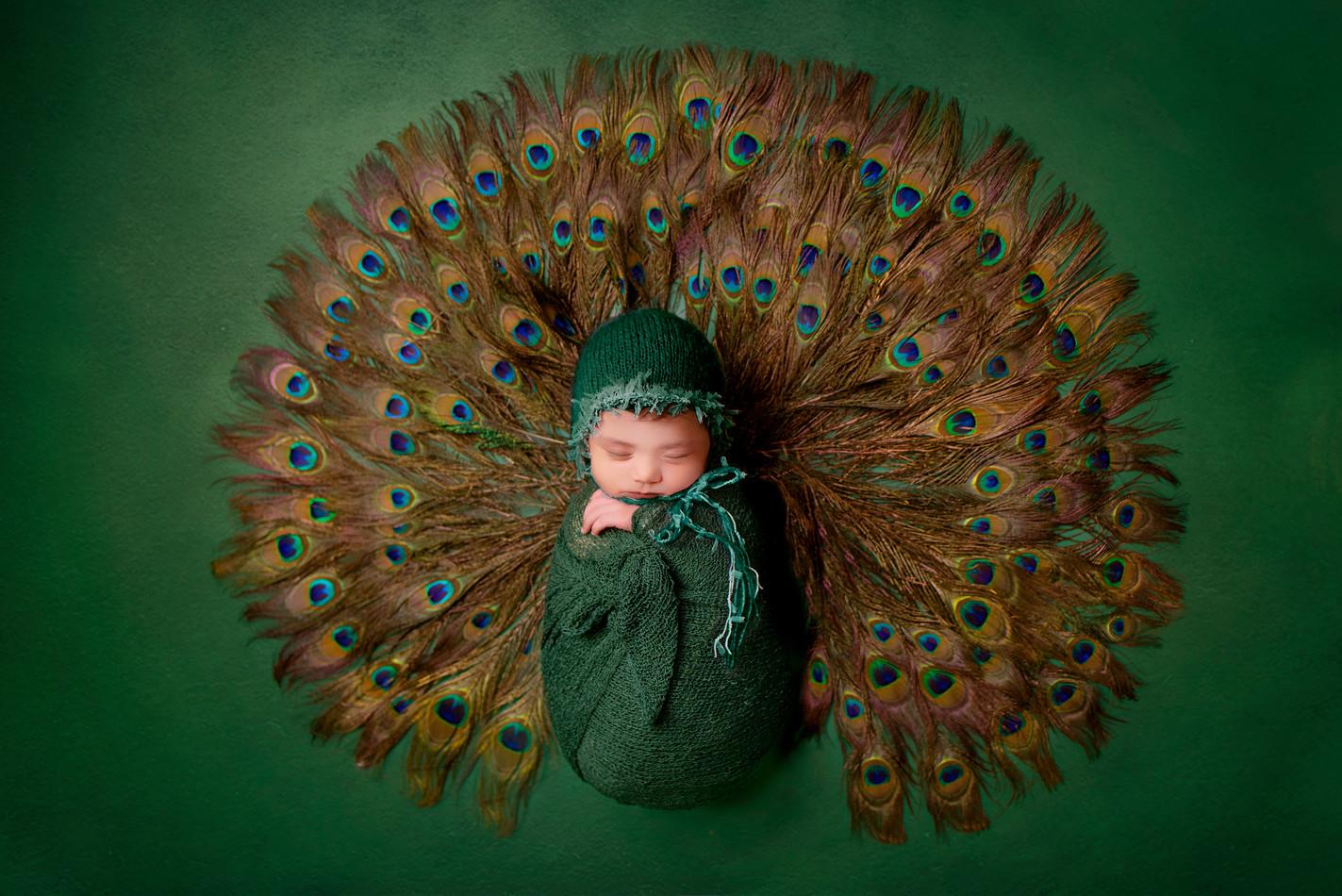 Newborn Peacock photography