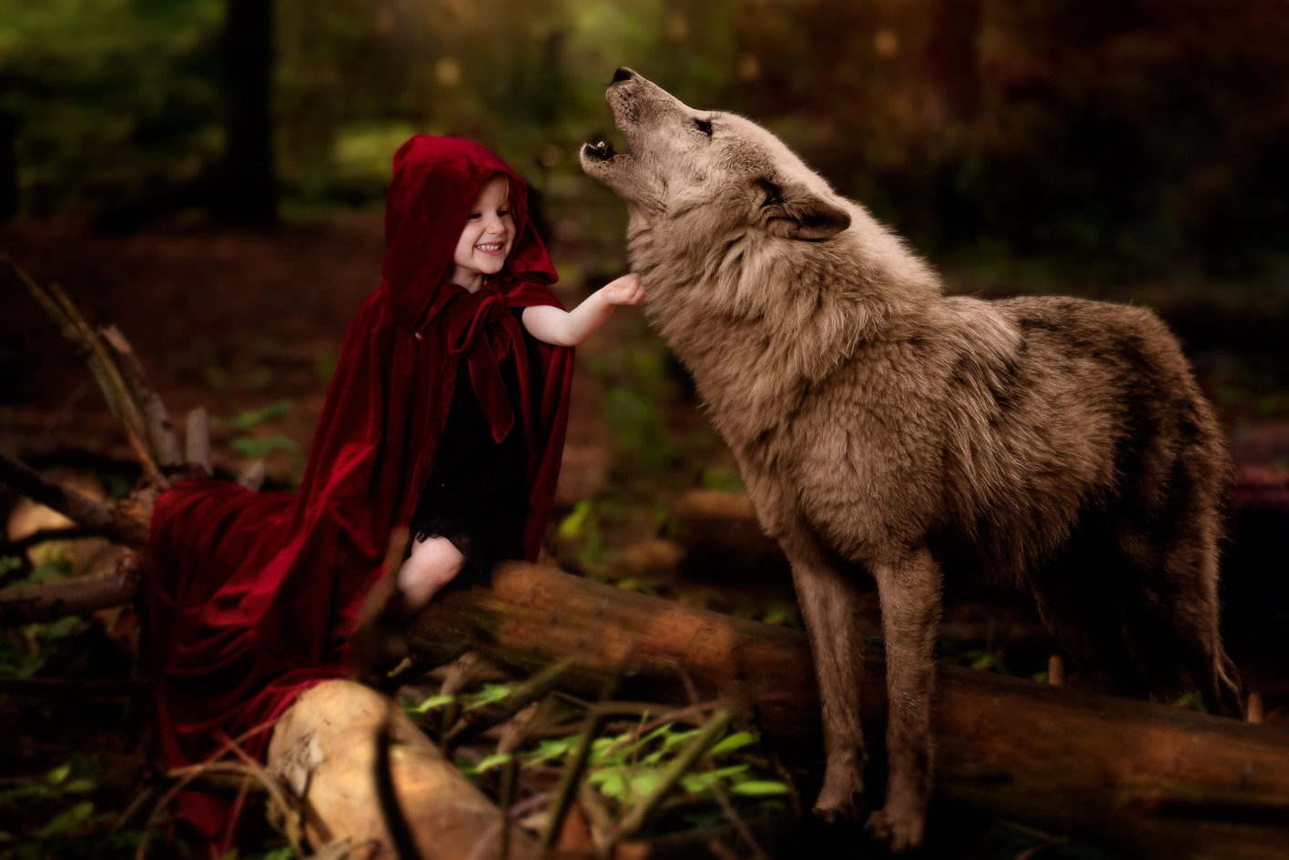 Little Red Riding Hood petting the big bad wolf