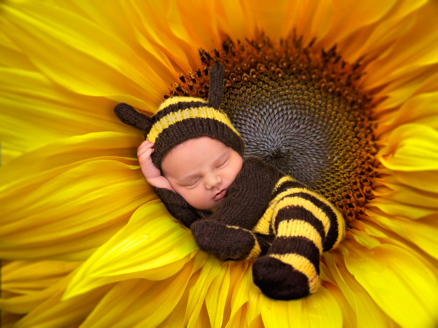 Bumble Bee Baby in a Sunflower