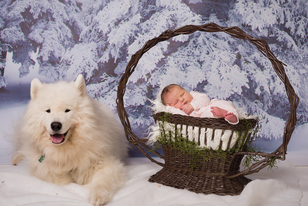 Newborn Photography with a dog in Overland Park photo studio