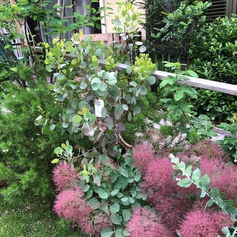 garden_003.JPG