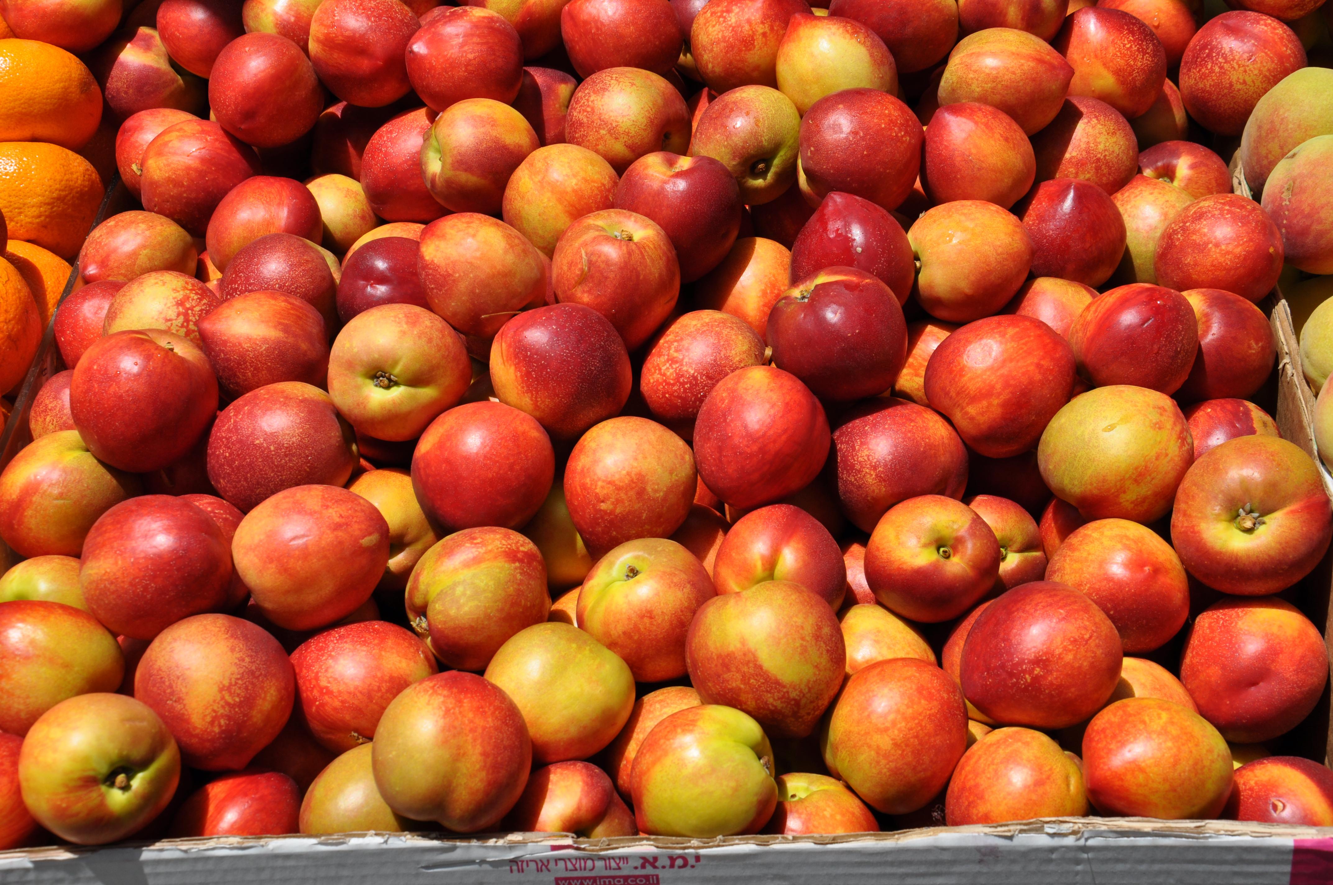 פרי בשיא העונה