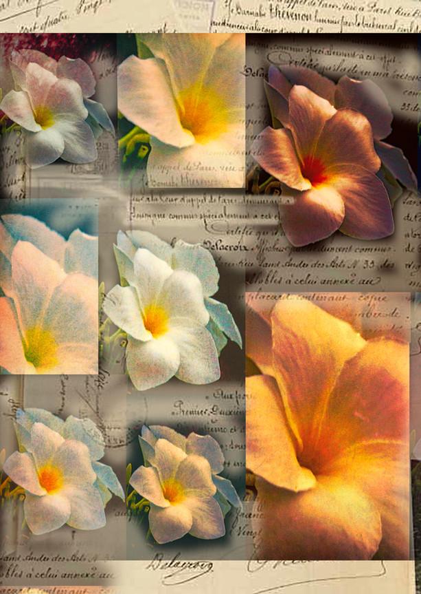 Flower Love letter