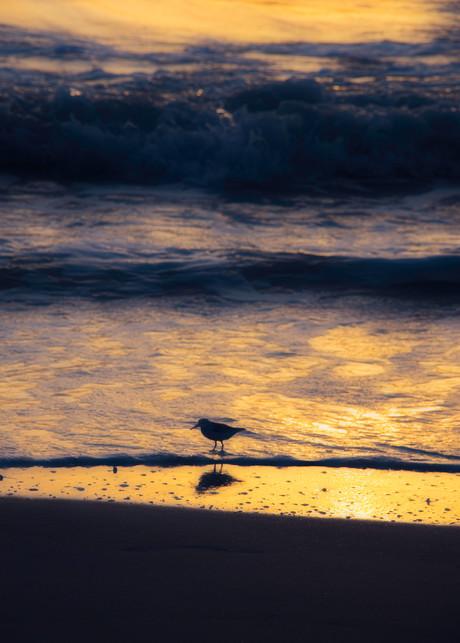 Beach Dreamer