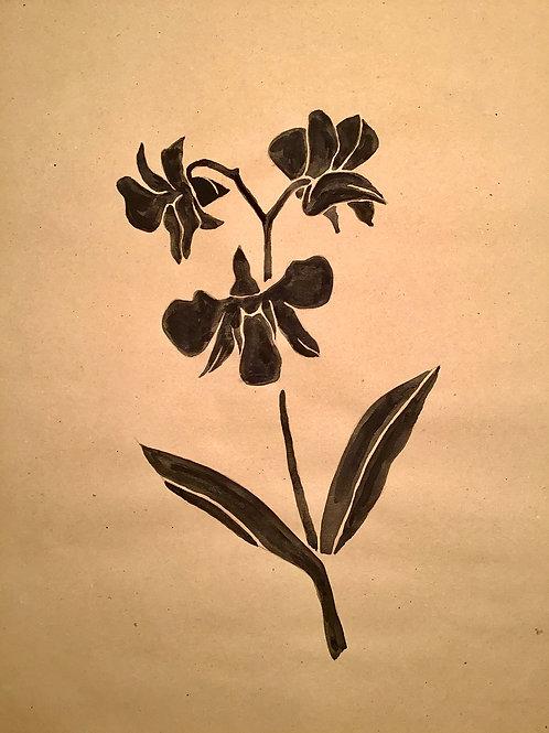 MELANIE SCHÖNIGER, Orchid, 30 cmx 42 cm, 2019