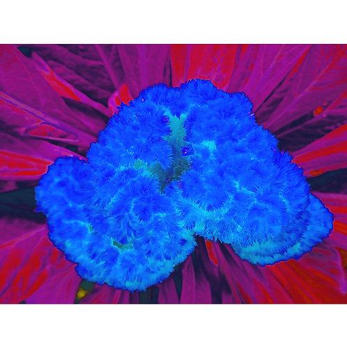 "Tjaša Iris , ""Dark Blue Brain"", photograph - mixed media, 120 x 160 cm, 2018"
