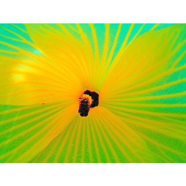 "Tjaša Iris, ""Striped Beauty - Yellow"""