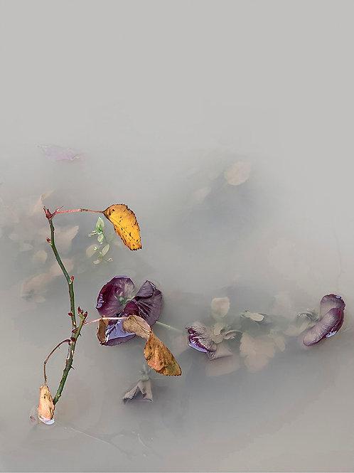 Carmen Isasi, Mist and Water II, Photograph, 100 x 75 cm