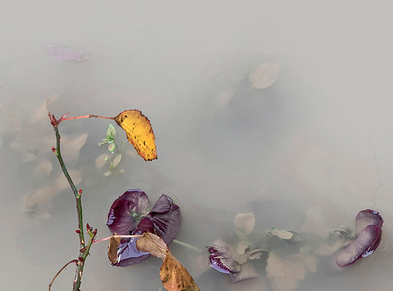 Mist and Water II