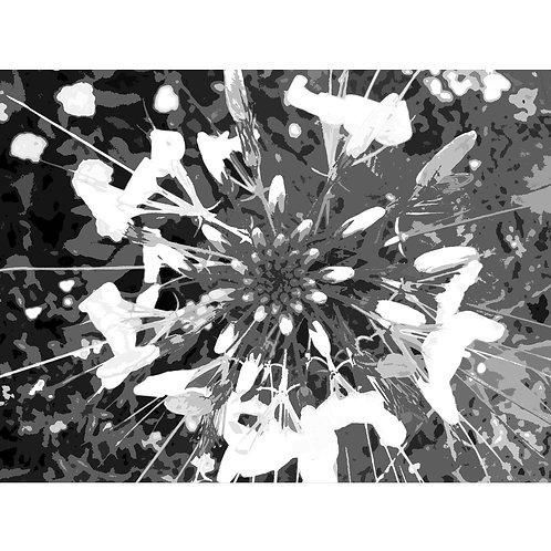 TJAŠA IRIS homage to KING BHUMIBOL ADULYADEJ, LOTUS, 160 X 120 CM - Limited Edit