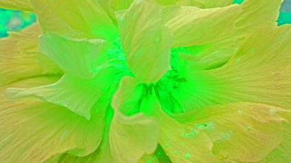 light from the heart yellow-green M.jpg