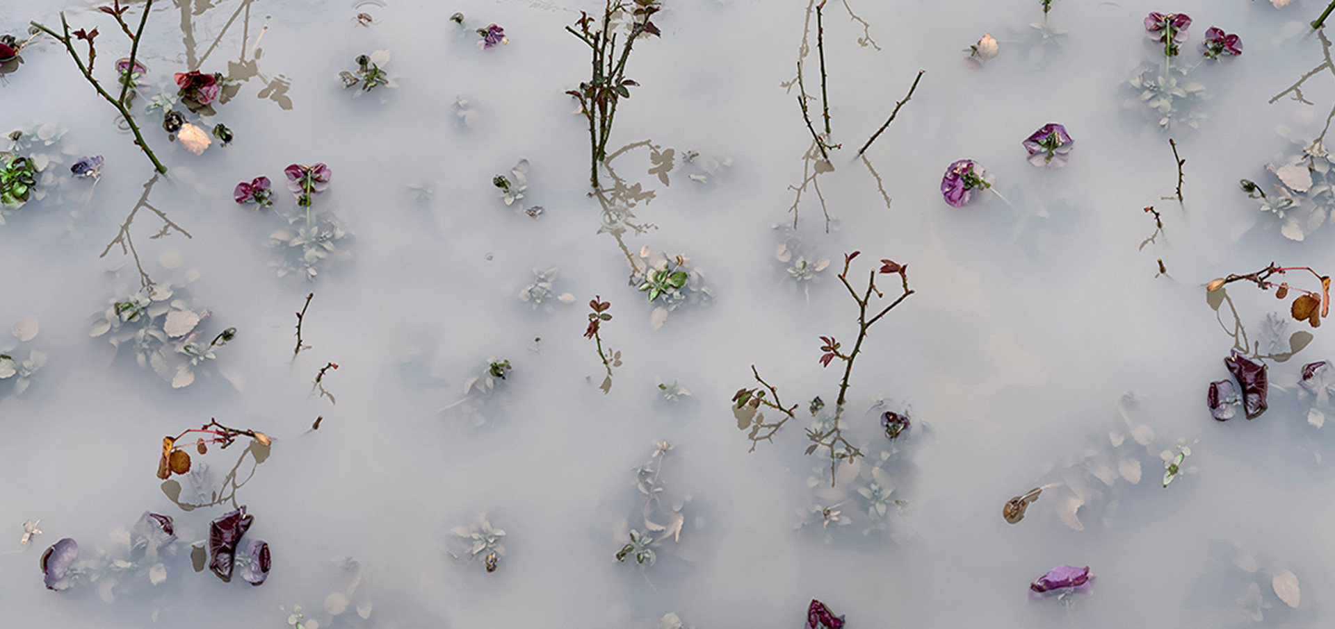 Mist and Water I