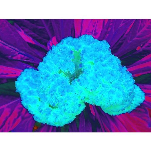 "Tjaša Iris , ""Light Blue Brain"", photograph - mixed media, 120 x 160 cm, 2018"