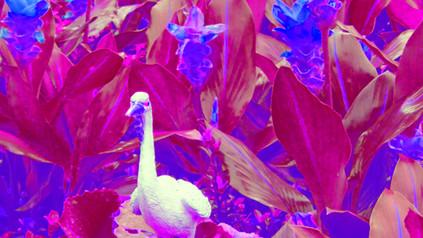 duck from wat arun purple M.jpg