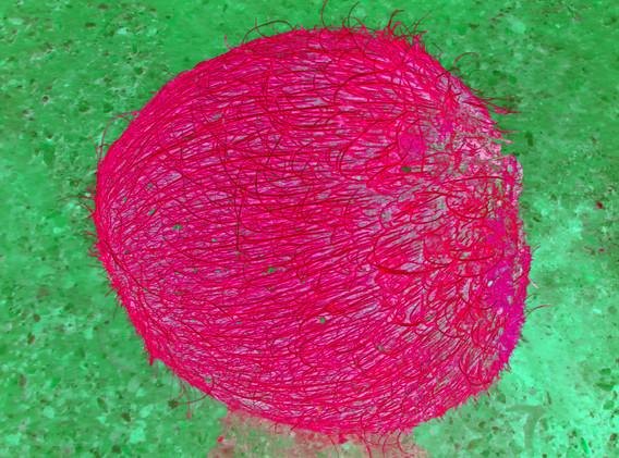 TJAŠA IRIS, COCONUT MOON, (Red)