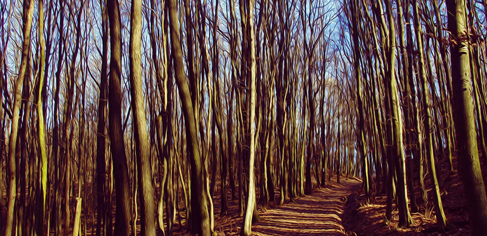 KRISTIN INBAL, In the Woods