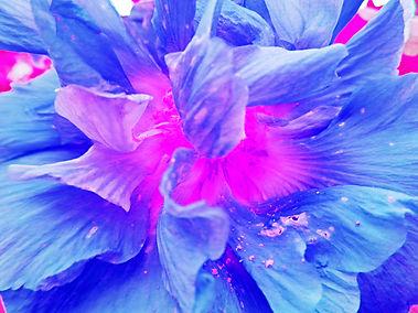 light from the heart magenta M.jpg