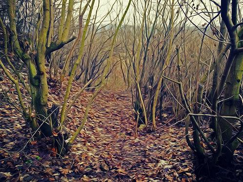 KRISTIN INBAL,Forest, 30 cm 45 cm, 2020