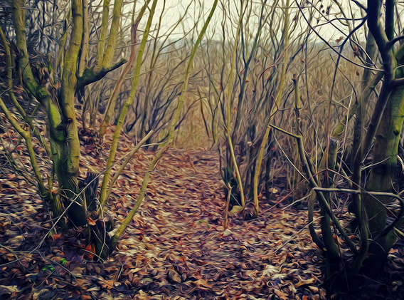 KRISTIN INBAL, Forest