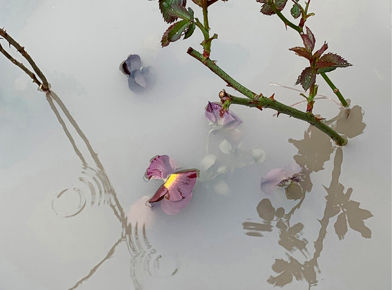 Mist and Water V