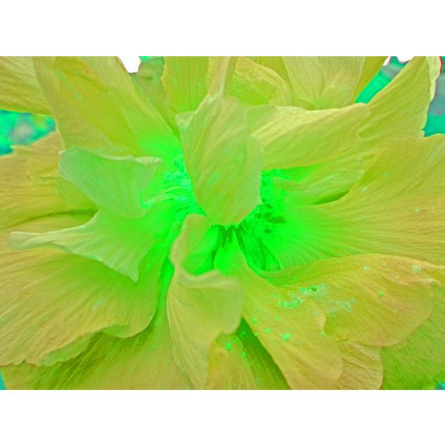 """Tjaša Iris, """"Luminous Green"""""""