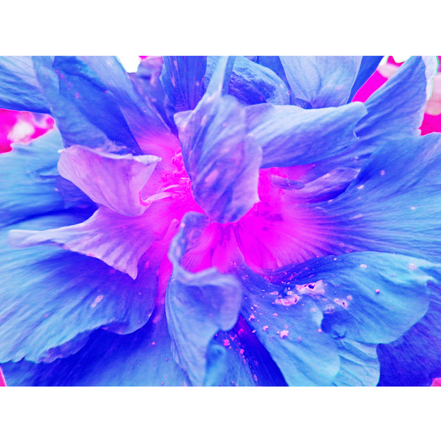 "Tjaša Iris , ""Luminous Magenta"""