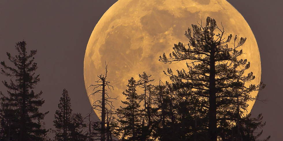 Hunters Moon - Yoga & Sound
