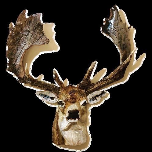 Driftwood Stag/Buck - Fallow